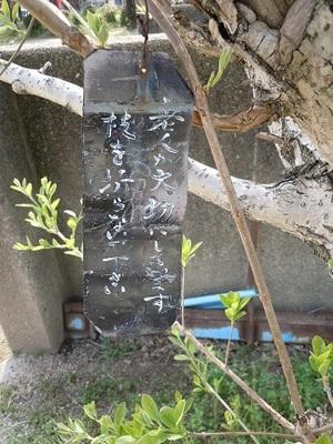 03 城西児童公園 なんじゃもんじゃの木 注意札.JPG