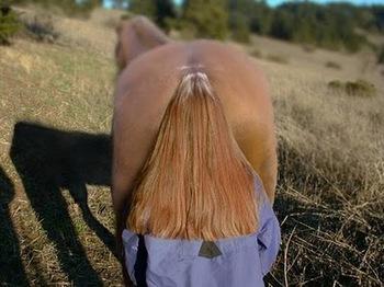 馬?.jpg