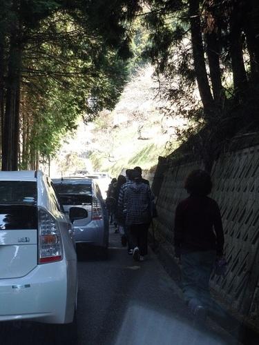 02 醍醐桜 徒歩で登る.JPG