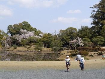 03 衆楽園 糸桜付近.JPG