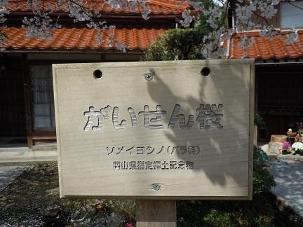 07 がいせん桜 ソメイヨシノ.JPG