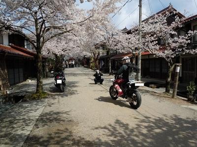 09 がいせん桜 記念写真.JPG