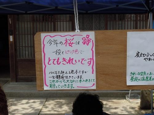 10 がいせん桜 新庄がんばろう会3.JPG